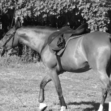 Horse - Cavallo